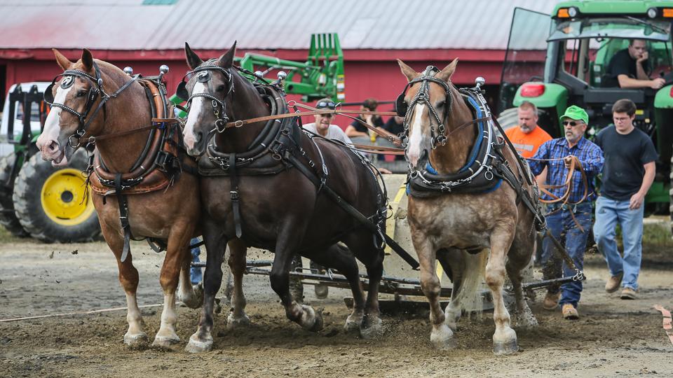 rochesterfair2016-triplehorsepull-6y9a2106