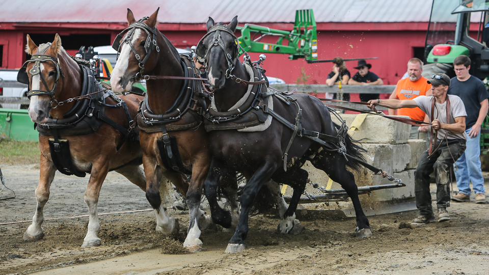 rochesterfair2016-triplehorsepull-6y9a2120