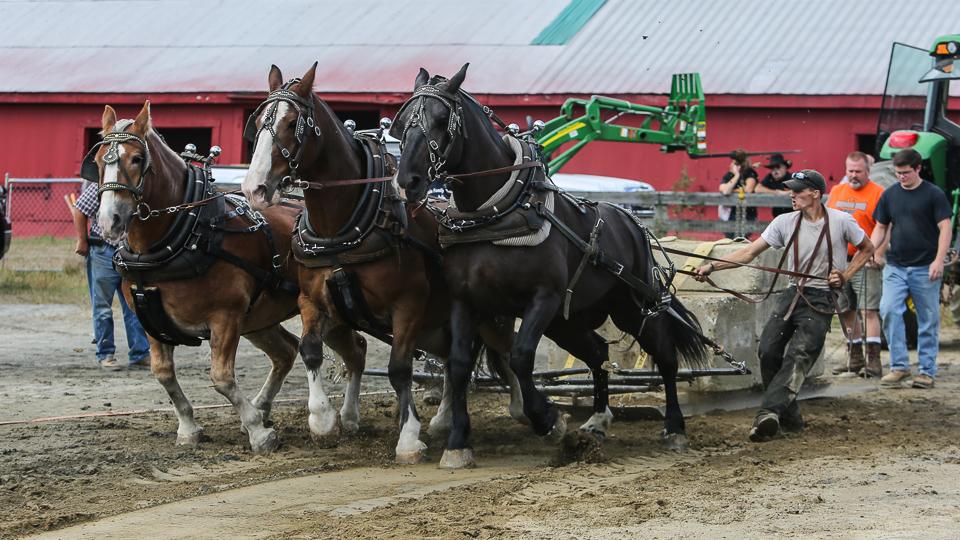 rochesterfair2016-triplehorsepull-6y9a2124