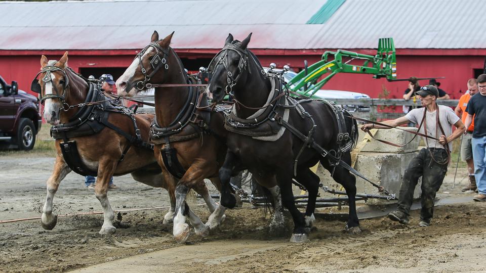 rochesterfair2016-triplehorsepull-6y9a2126