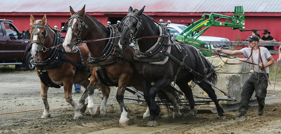 rochesterfair2016-triplehorsepull-6y9a2127
