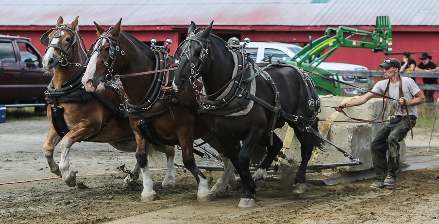 rochesterfair2016-triplehorsepull-6y9a2128