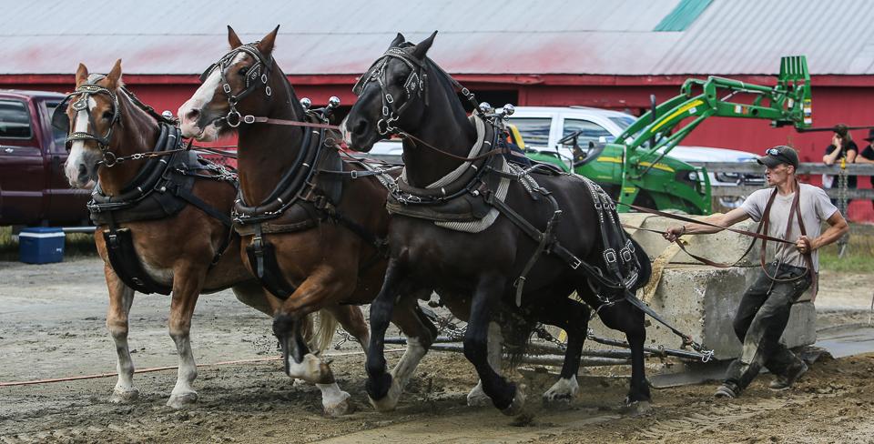 rochesterfair2016-triplehorsepull-6y9a2129
