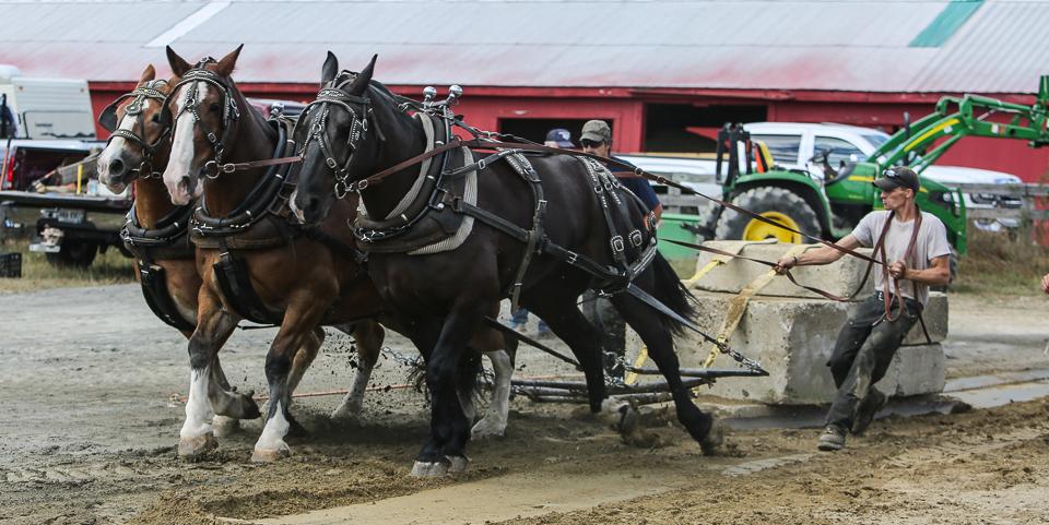 rochesterfair2016-triplehorsepull-6y9a2133