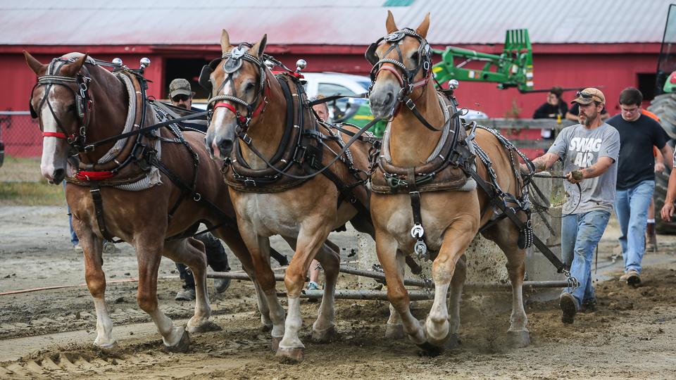 rochesterfair2016-triplehorsepull-6y9a2171