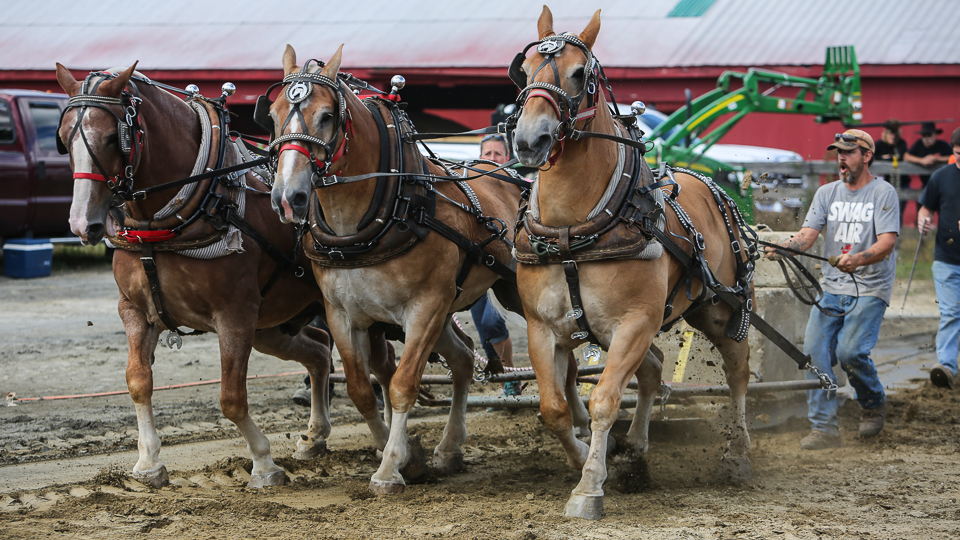 rochesterfair2016-triplehorsepull-6y9a2174