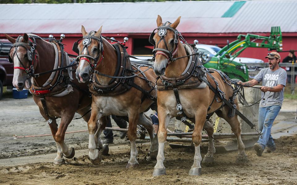 rochesterfair2016-triplehorsepull-6y9a2175