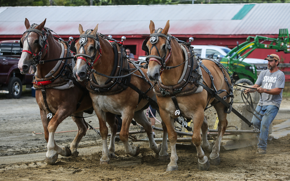rochesterfair2016-triplehorsepull-6y9a2176