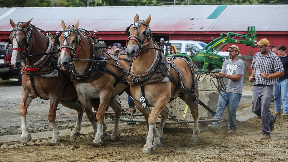rochesterfair2016-triplehorsepull-6y9a2177