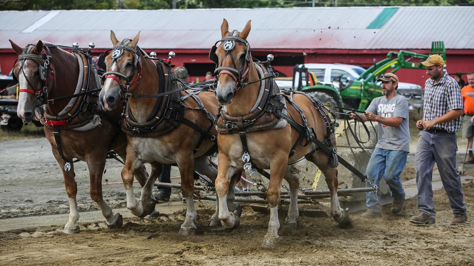 rochesterfair2016-triplehorsepull-6y9a2178