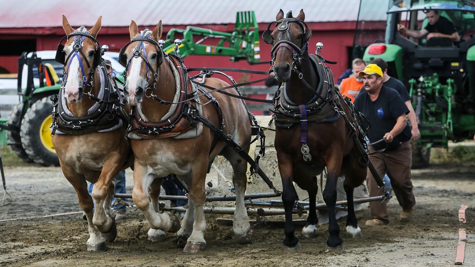 rochesterfair2016-triplehorsepull-6y9a2204