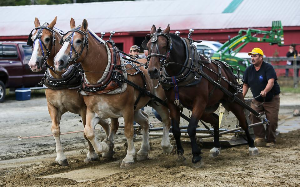 rochesterfair2016-triplehorsepull-6y9a2216