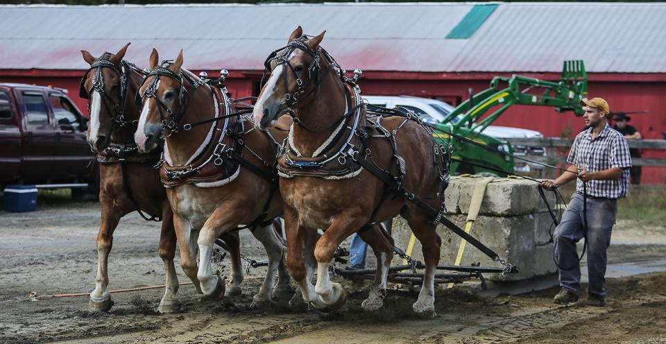 rochesterfair2016-triplehorsepull-6y9a2236
