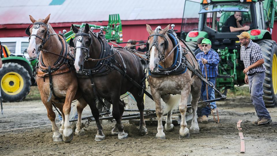 rochesterfair2016-triplehorsepull-6y9a2258