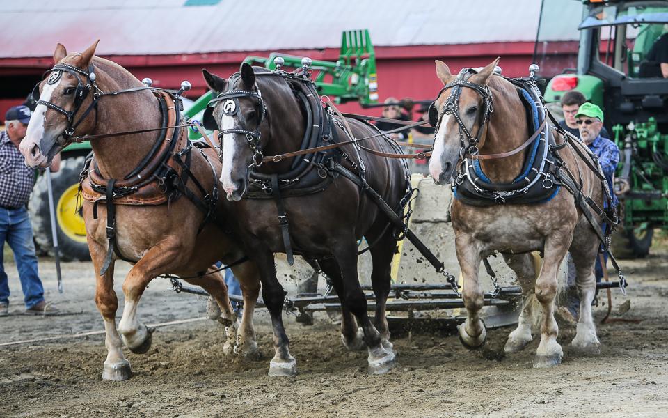 rochesterfair2016-triplehorsepull-6y9a2261