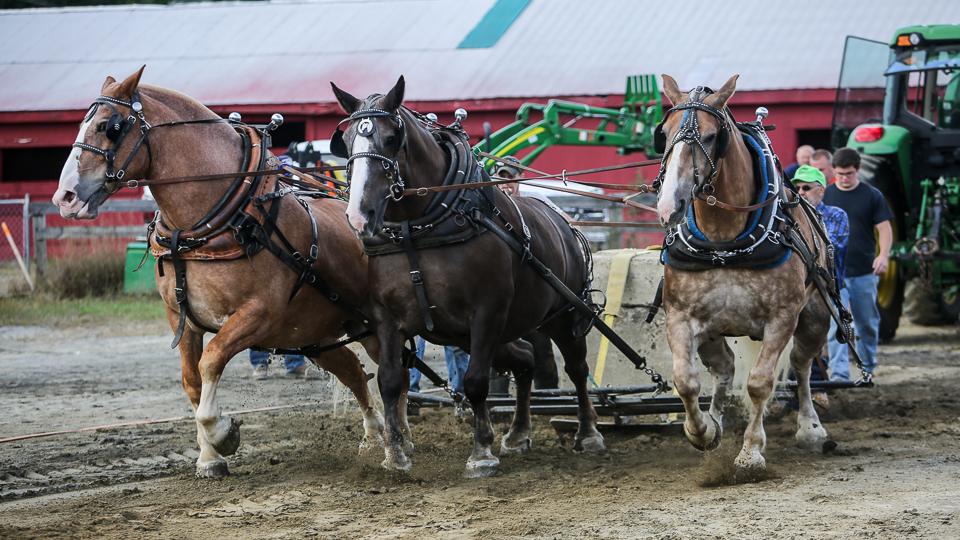 rochesterfair2016-triplehorsepull-6y9a2267