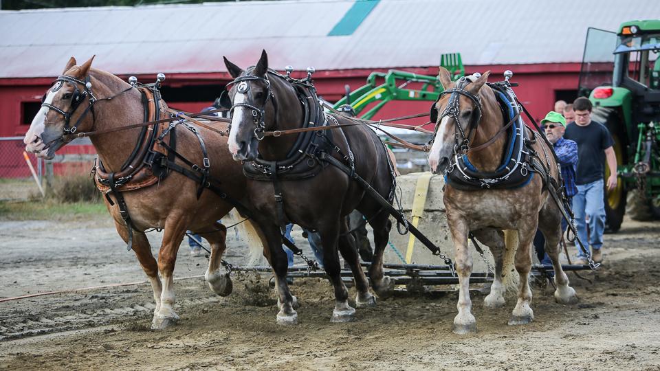 rochesterfair2016-triplehorsepull-6y9a2268
