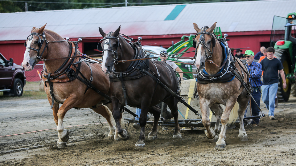 rochesterfair2016-triplehorsepull-6y9a2270
