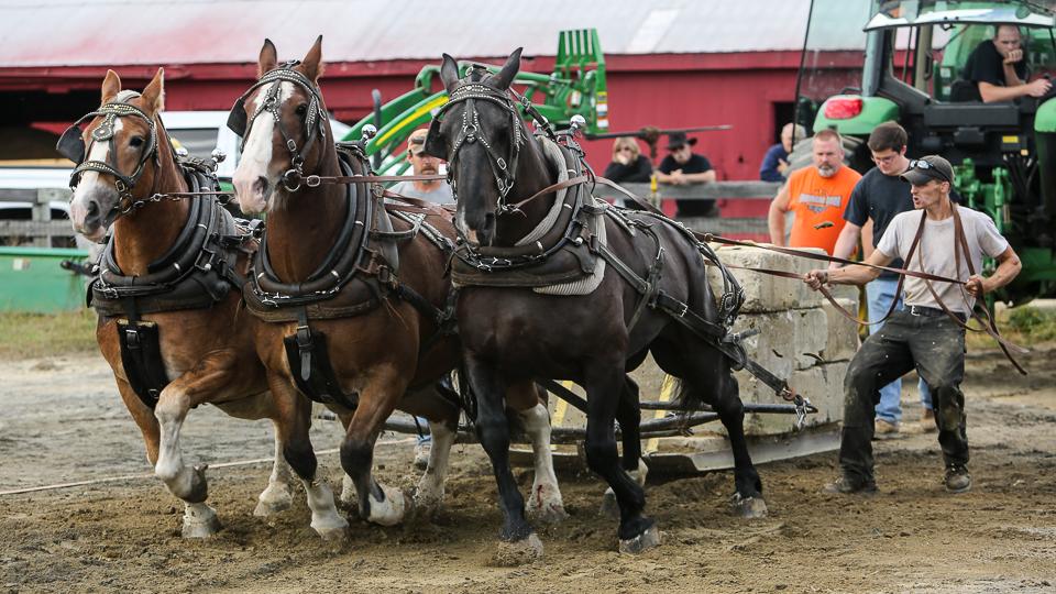 rochesterfair2016-triplehorsepull-6y9a2286