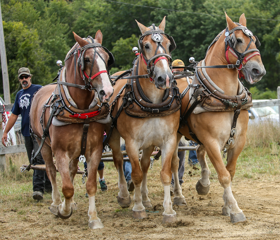 rochesterfair2016-triplehorsepull-6y9a2309