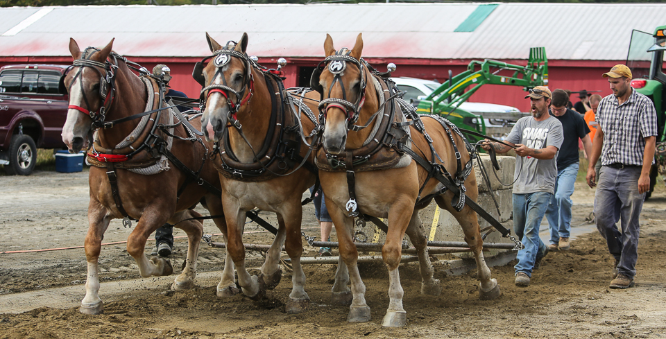 rochesterfair2016-triplehorsepull-6y9a2333