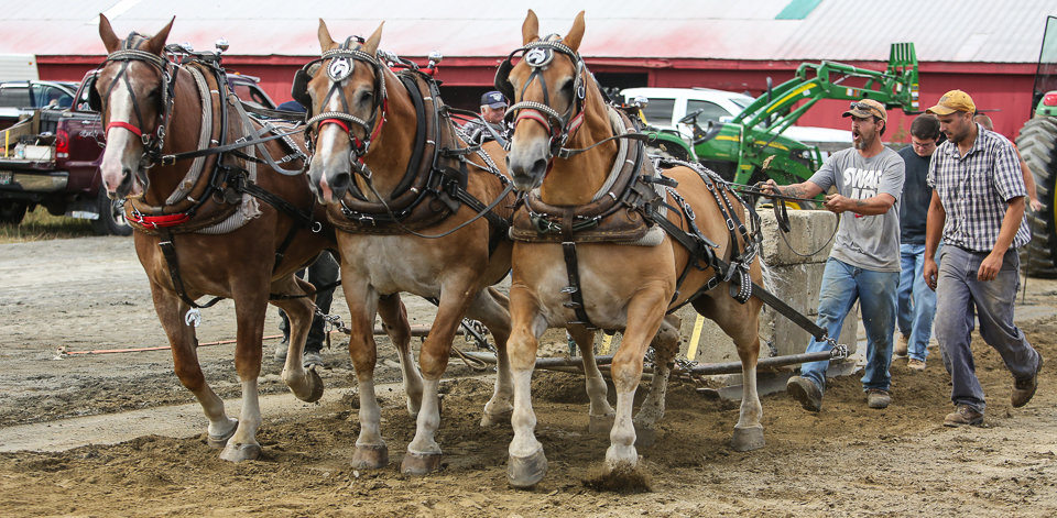 rochesterfair2016-triplehorsepull-6y9a2335