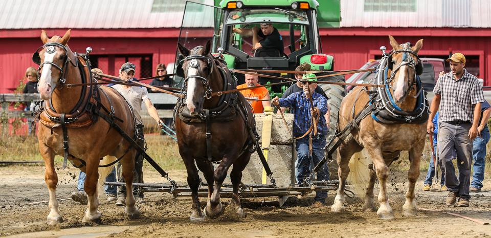 rochesterfair2016-triplehorsepull-6y9a2401