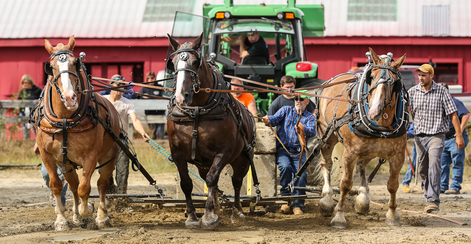 rochesterfair2016-triplehorsepull-6y9a2405