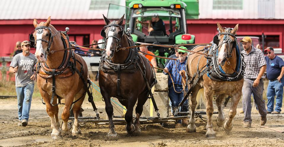 rochesterfair2016-triplehorsepull-6y9a2408