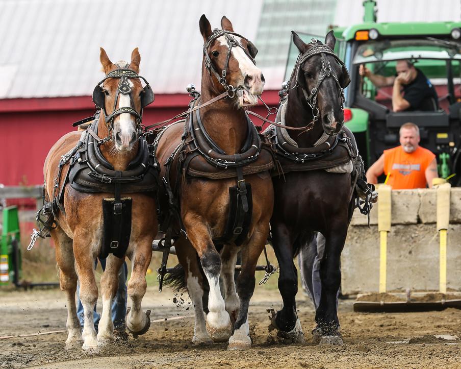 rochesterfair2016-triplehorsepull-6y9a2417