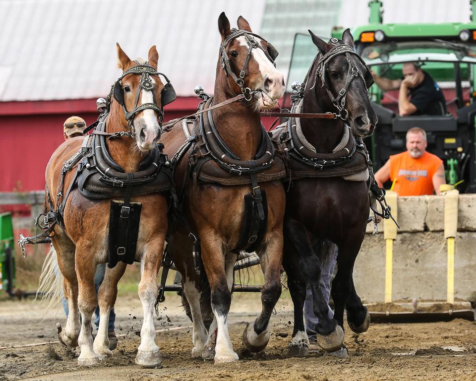 rochesterfair2016-triplehorsepull-6y9a2418