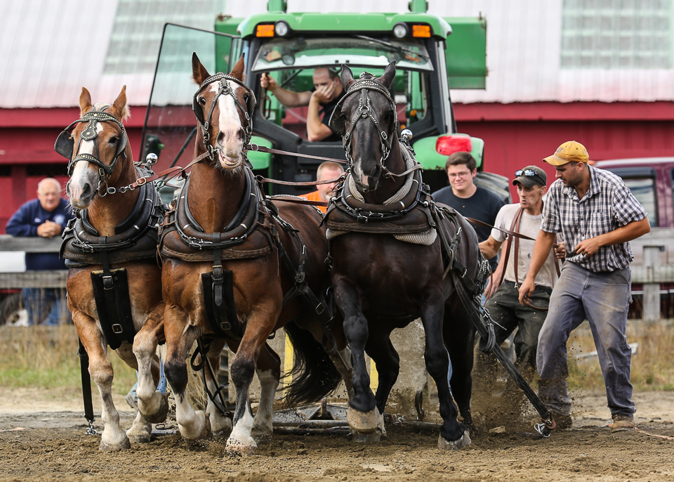 rochesterfair2016-triplehorsepull-6y9a2424