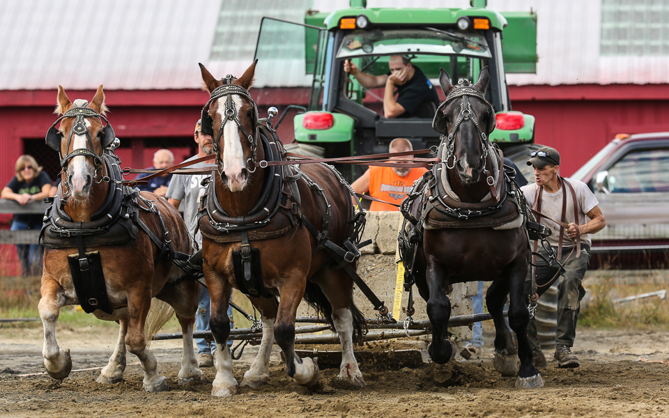 rochesterfair2016-triplehorsepull-6y9a2431