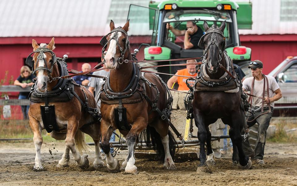 rochesterfair2016-triplehorsepull-6y9a2432