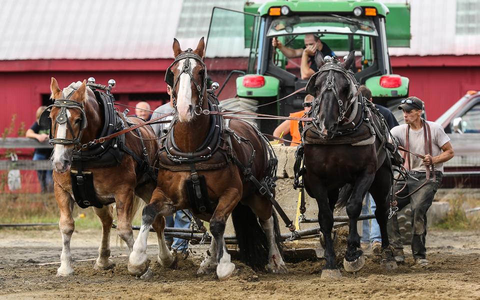 rochesterfair2016-triplehorsepull-6y9a2433