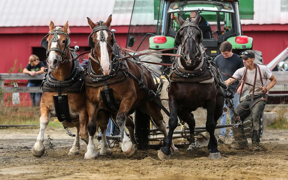 rochesterfair2016-triplehorsepull-6y9a2435
