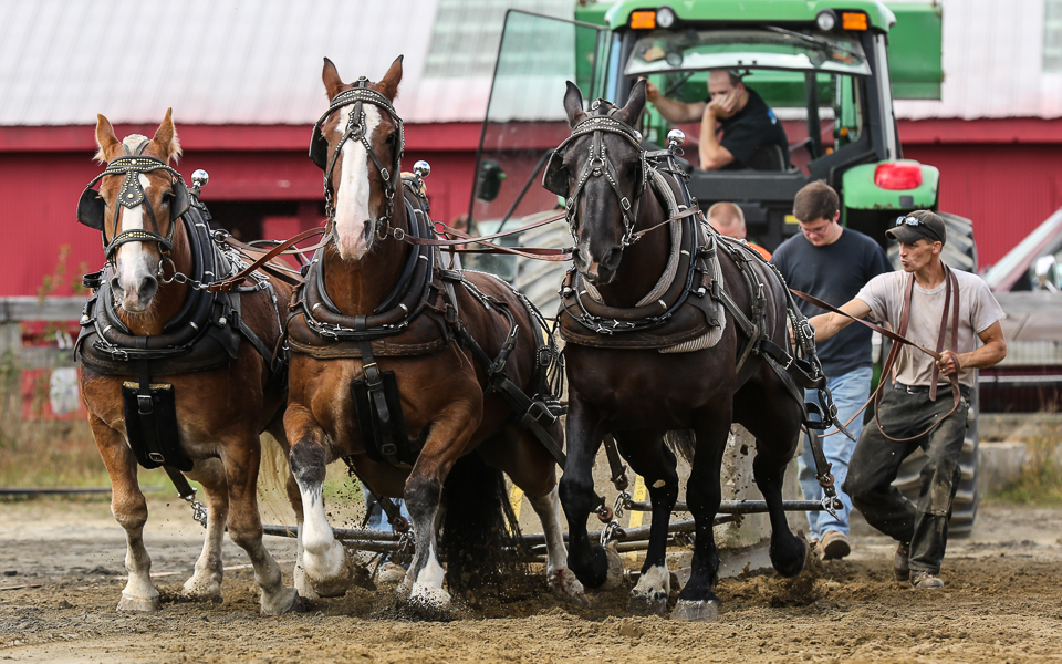 rochesterfair2016-triplehorsepull-6y9a2438