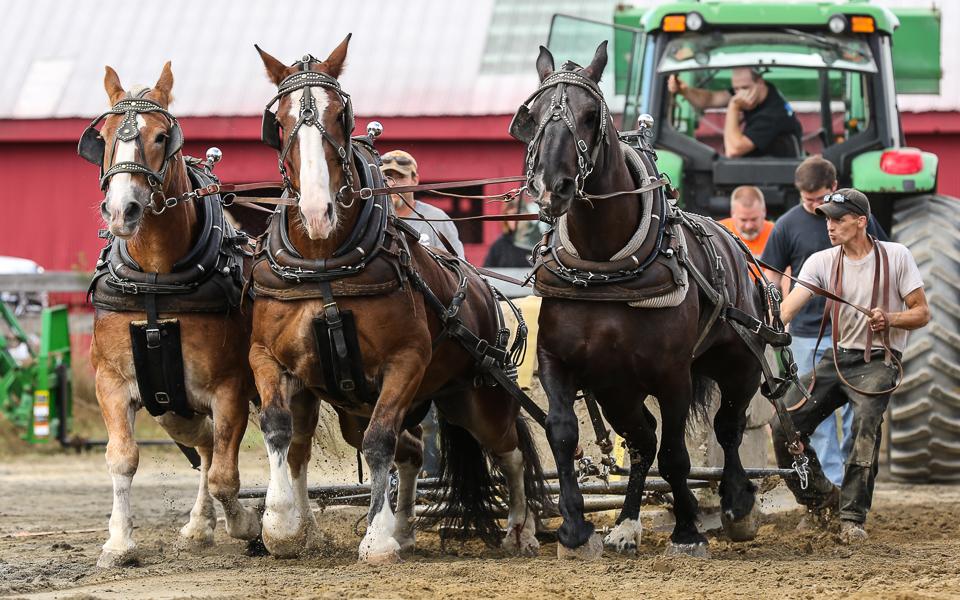 rochesterfair2016-triplehorsepull-6y9a2442