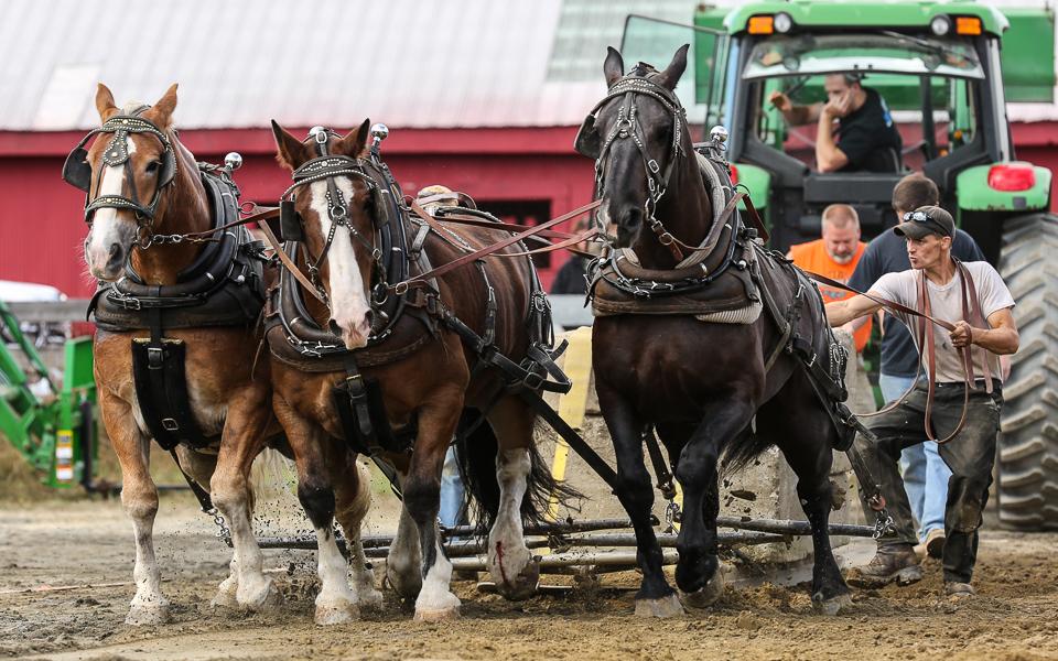 rochesterfair2016-triplehorsepull-6y9a2443