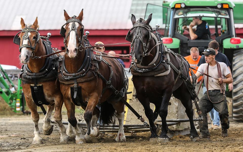 rochesterfair2016-triplehorsepull-6y9a2444