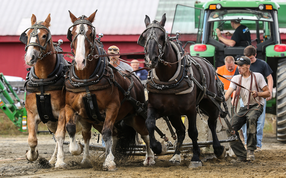 rochesterfair2016-triplehorsepull-6y9a2445