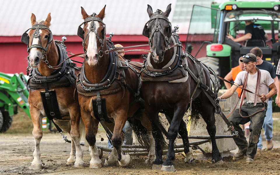 rochesterfair2016-triplehorsepull-6y9a2447