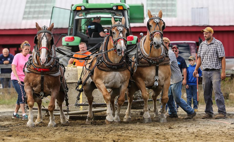 rochesterfair2016-triplehorsepull-6y9a2470