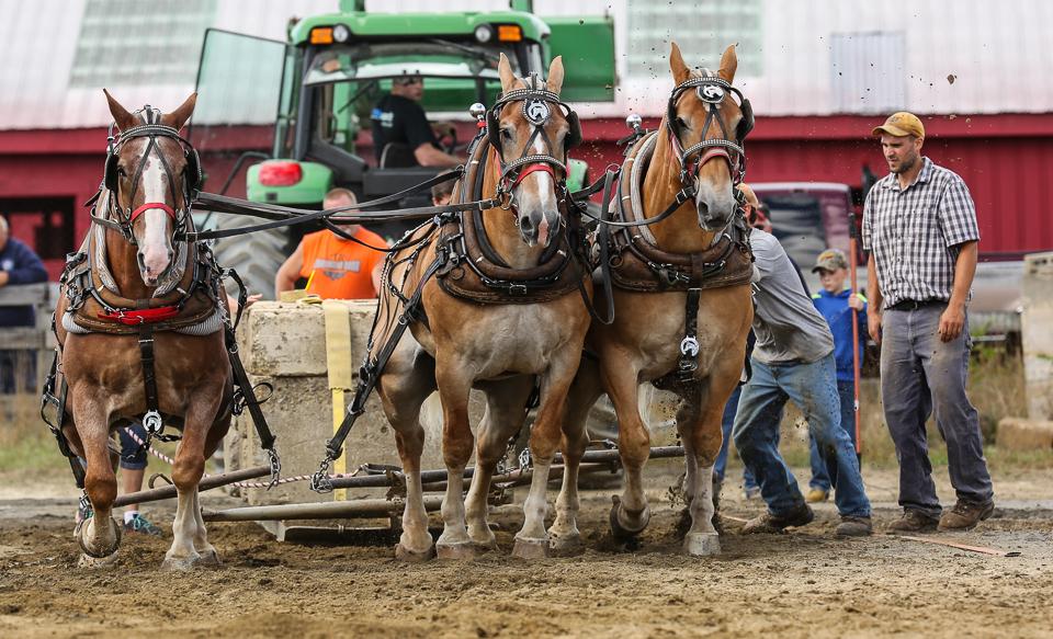 rochesterfair2016-triplehorsepull-6y9a2473