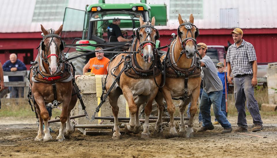 rochesterfair2016-triplehorsepull-6y9a2474
