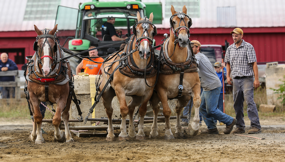 rochesterfair2016-triplehorsepull-6y9a2475