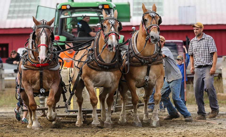 rochesterfair2016-triplehorsepull-6y9a2479