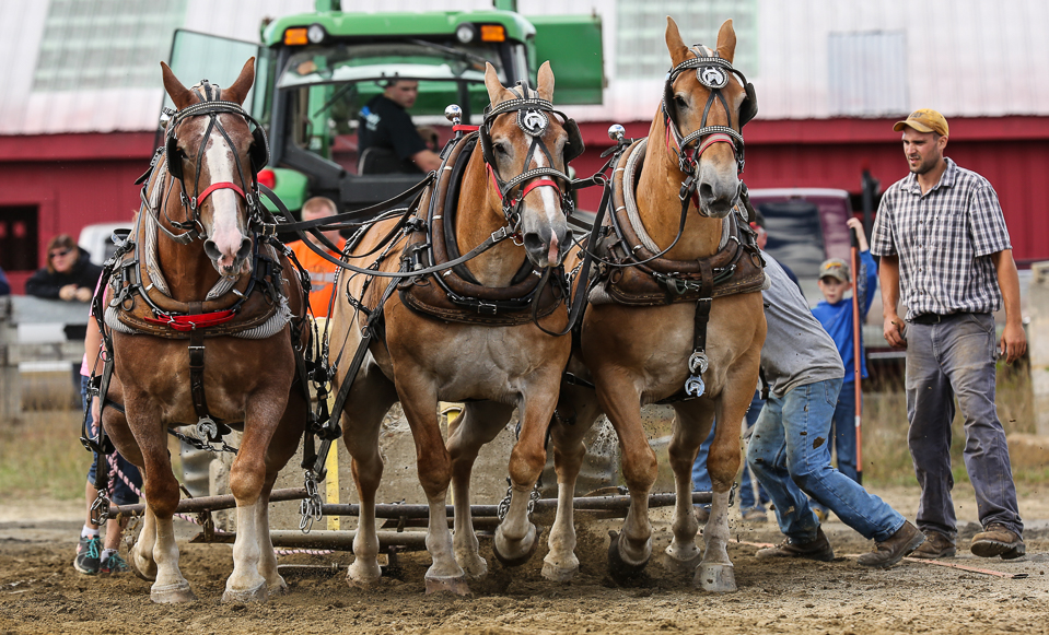 rochesterfair2016-triplehorsepull-6y9a2480