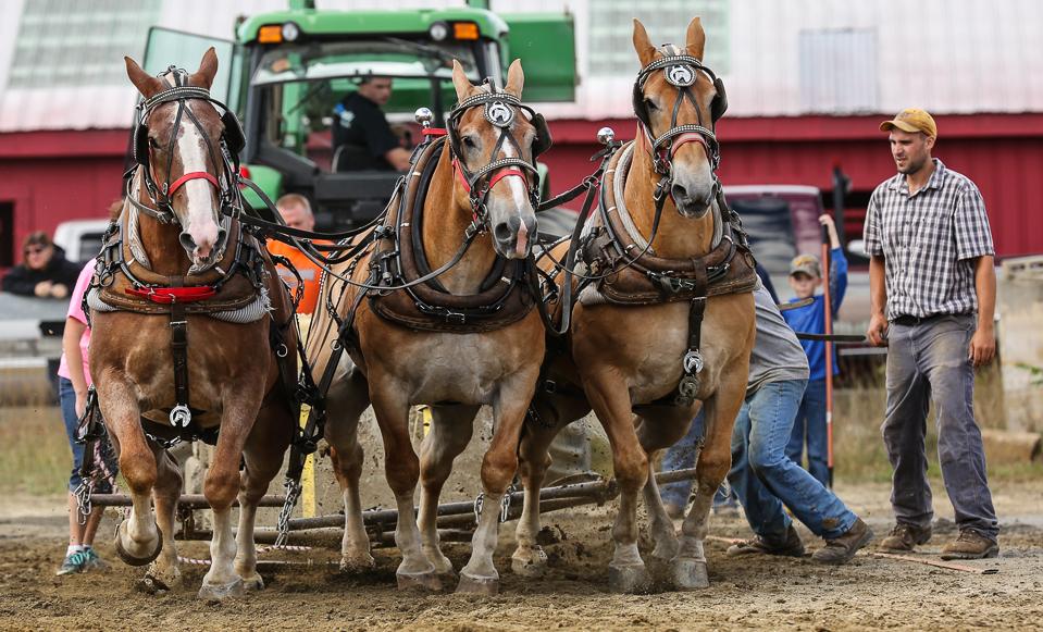 rochesterfair2016-triplehorsepull-6y9a2481