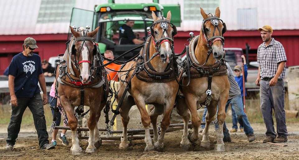 rochesterfair2016-triplehorsepull-6y9a2483